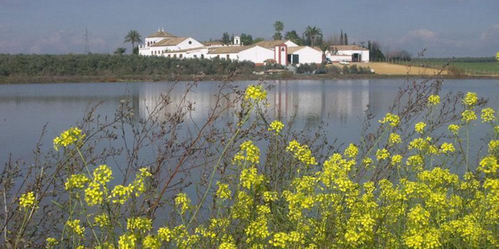 lago cortijo sevilla