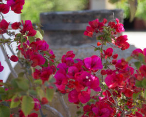 flores hacienda bodas sevilla