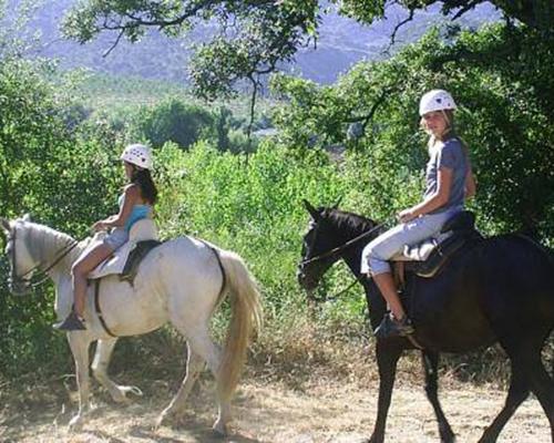 caballo hacienda sevilla