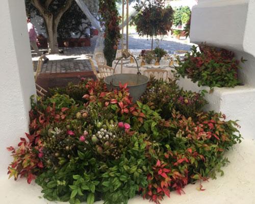 flores silvestres hacienda sevilla