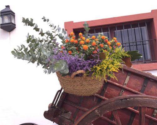 flores hacienda sevilla