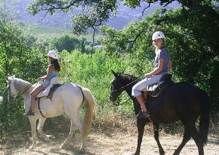 caballo naturaleza hacienda sevilla